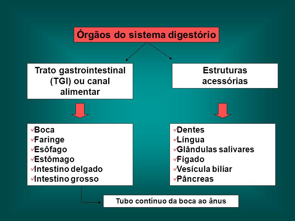 Trato gastrointestinal (TGI) ou canal alimentar Estruturas acessórias Dentes Língua Glândulas salivares Fígado Vesícula biliar Pâncreas Boca Faringe E