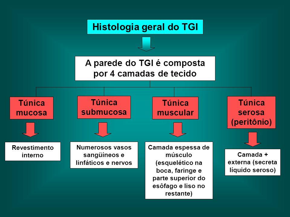 Histologia geral do TGI Túnica mucosa Túnica serosa (peritônio) Túnica muscular A parede do TGI é composta por 4 camadas de tecido Túnica submucosa Re