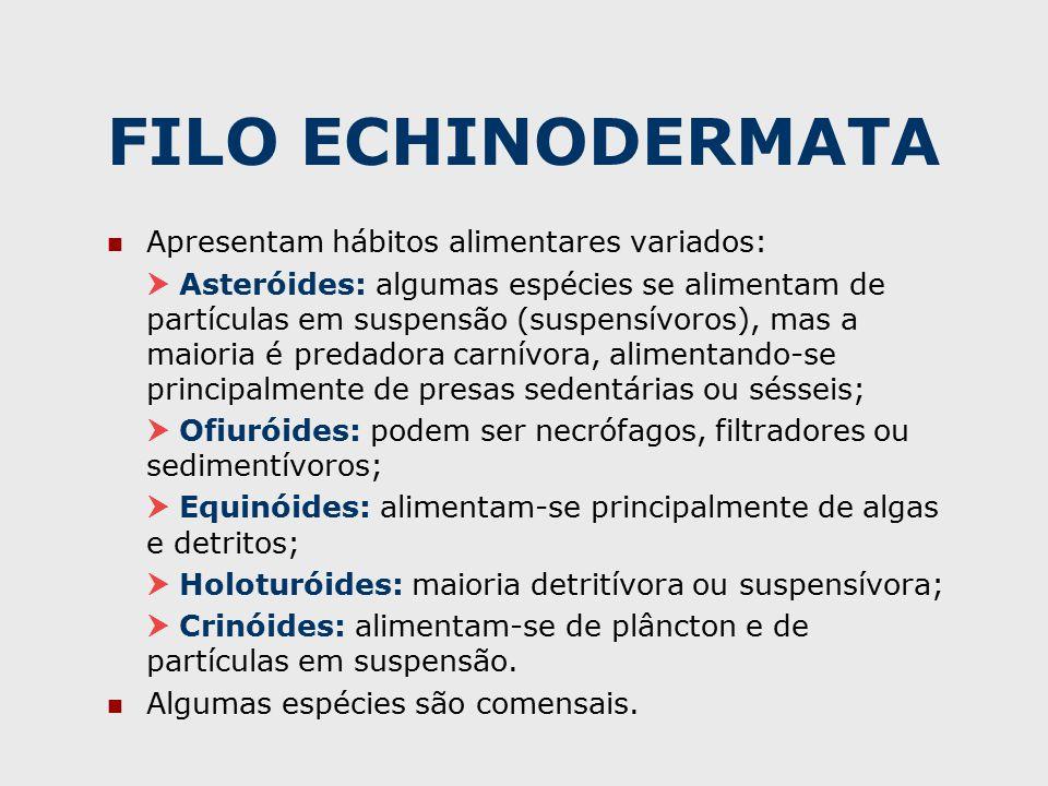 FILO ECHINODERMATA Apresentam hábitos alimentares variados:  Asteróides: algumas espécies se alimentam de partículas em suspensão (suspensívoros), mas a maioria é predadora carnívora, alimentando-se principalmente de presas sedentárias ou sésseis;  Ofiuróides: podem ser necrófagos, filtradores ou sedimentívoros;  Equinóides: alimentam-se principalmente de algas e detritos;  Holoturóides: maioria detritívora ou suspensívora;  Crinóides: alimentam-se de plâncton e de partículas em suspensão.