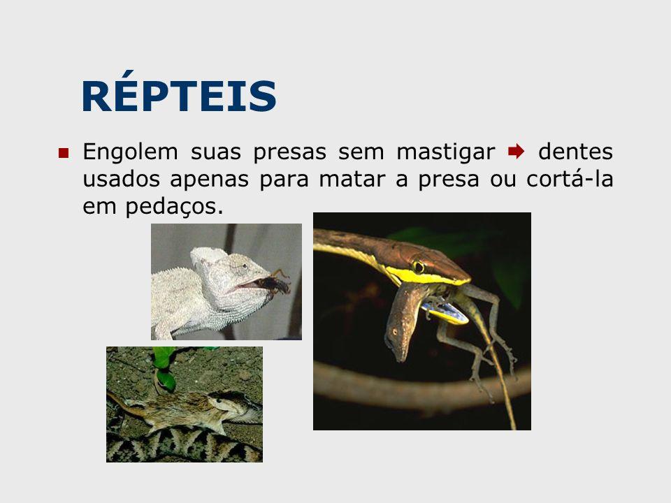 RÉPTEIS Engolem suas presas sem mastigar  dentes usados apenas para matar a presa ou cortá-la em pedaços.