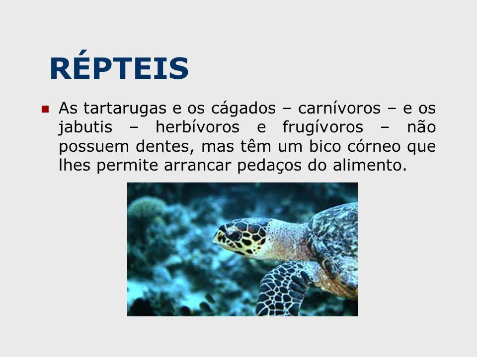 RÉPTEIS As tartarugas e os cágados – carnívoros – e os jabutis – herbívoros e frugívoros – não possuem dentes, mas têm um bico córneo que lhes permite arrancar pedaços do alimento.
