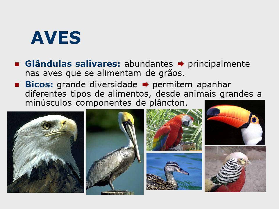 AVES Glândulas salivares: abundantes  principalmente nas aves que se alimentam de grãos.
