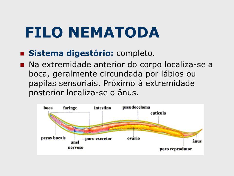 FILO NEMATODA Sistema digestório: completo.
