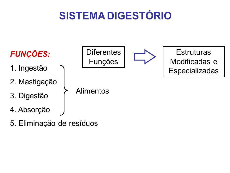 SISTEMA DIGESTÓRIO FUNÇÕES: 1. Ingestão 2. Mastigação 3. Digestão 4. Absorção 5. Eliminação de resíduos Alimentos Diferentes Funções Estruturas Modifi