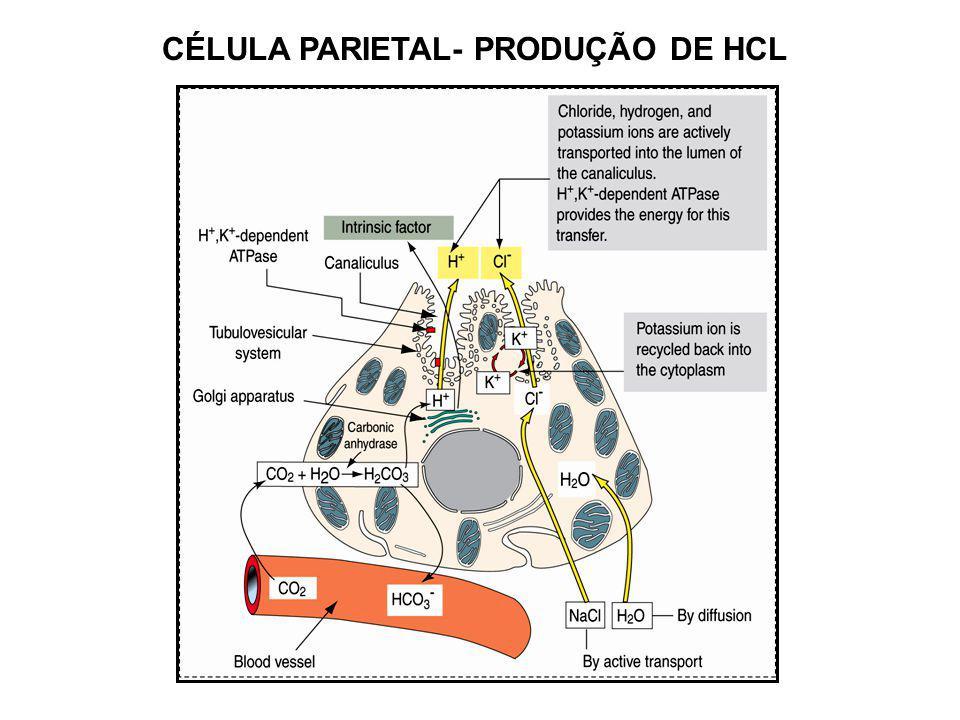 CÉLULA PARIETAL- PRODUÇÃO DE HCL