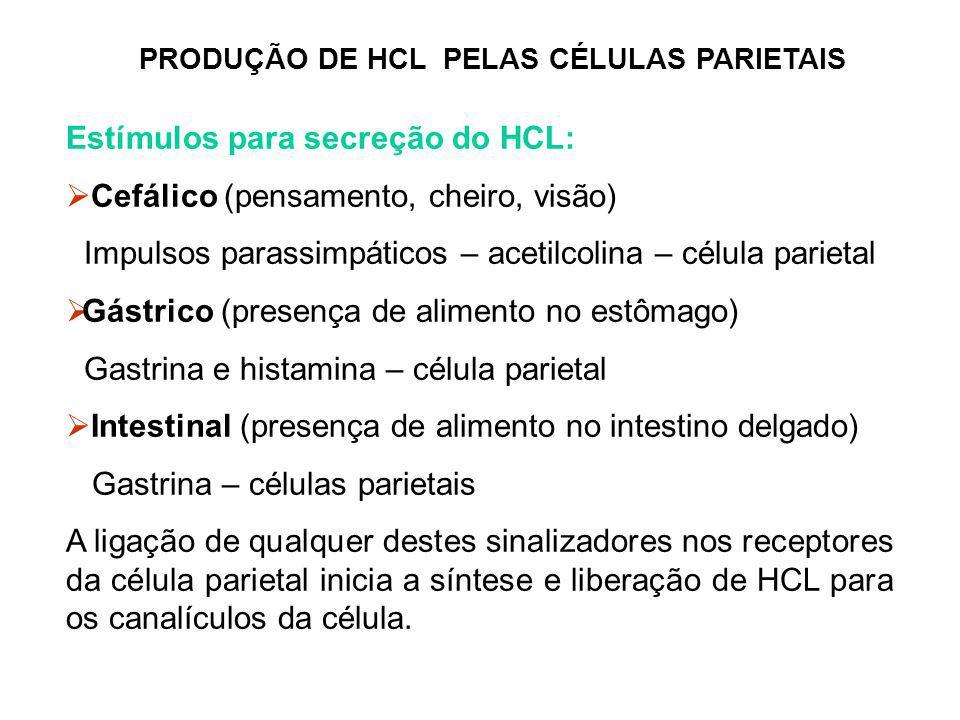 PRODUÇÃO DE HCL PELAS CÉLULAS PARIETAIS Estímulos para secreção do HCL:  Cefálico (pensamento, cheiro, visão) Impulsos parassimpáticos – acetilcolina