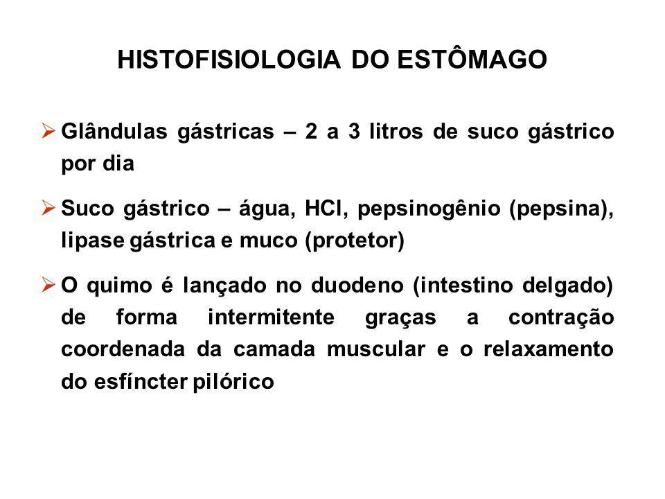 HISTOFISIOLOGIA DO ESTÔMAGO  Glândulas gástricas – 2 a 3 litros de suco gástrico por dia  Suco gástrico – água, HCl, pepsinogênio (pepsina), lipase