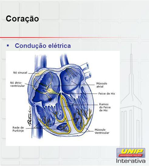 Coração  Condução elétrica