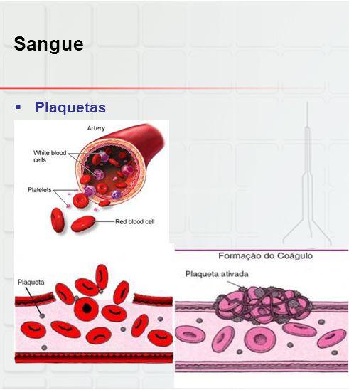 Sangue  Plaquetas