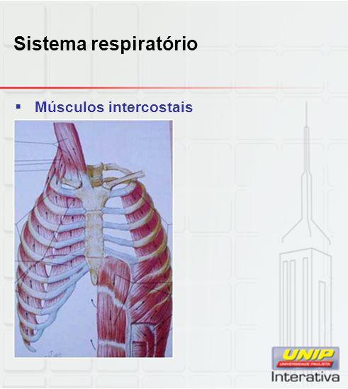 Sistema respiratório  Músculos intercostais