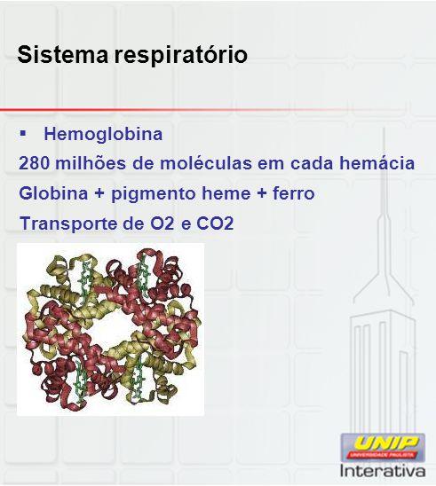 Sistema respiratório  Hemoglobina 280 milhões de moléculas em cada hemácia Globina + pigmento heme + ferro Transporte de O2 e CO2