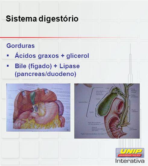 Sistema digestório Gorduras  Ácidos graxos + glicerol  Bile (fígado) + Lipase (pancreas/duodeno)