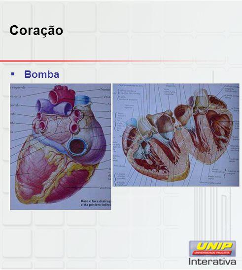 Sistema digestório  Sistema porta-hepático