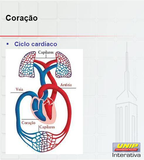 Sistema respiratório  Alvéolos