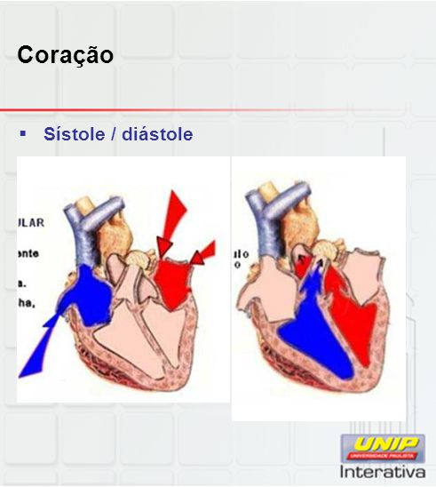 Coração  Válvulas cardíacas