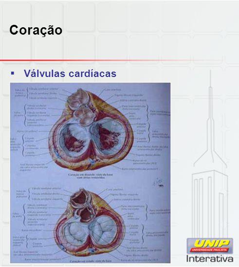 Sistema digestório  Particularidades do estômago