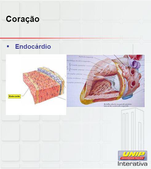 Coração  Miocárdio