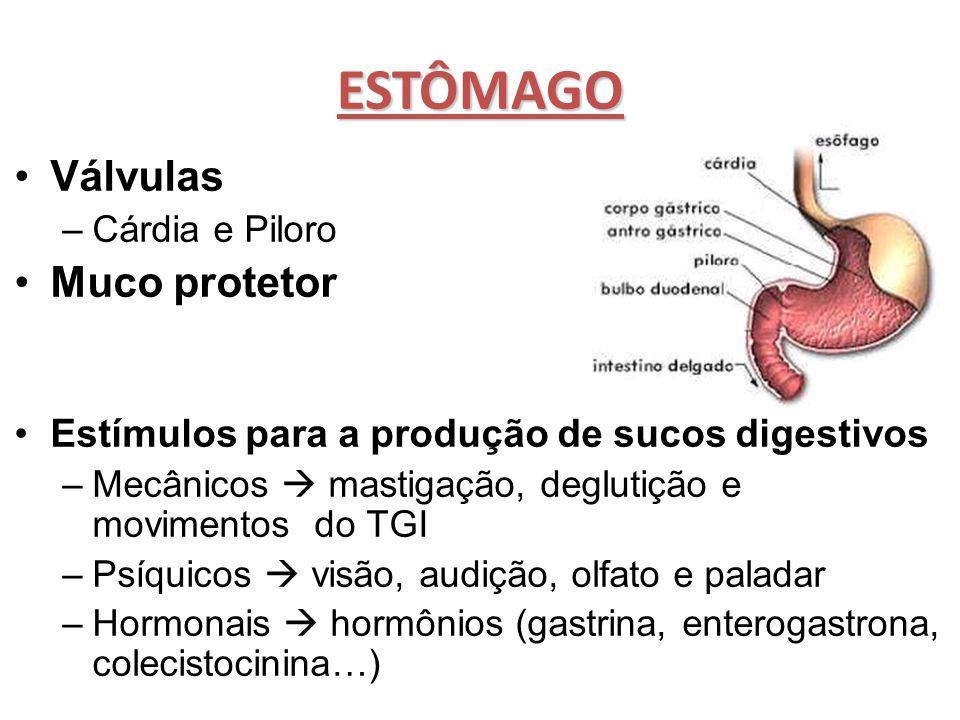 ESTÔMAGO Válvulas –Cárdia e Piloro Muco protetor Estímulos para a produção de sucos digestivos –Mecânicos  mastigação, deglutição e movimentos do TGI