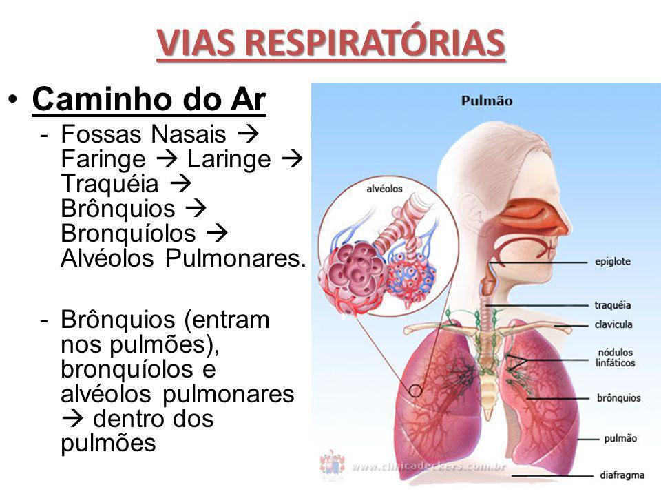 VIAS RESPIRATÓRIAS Caminho do Ar -Fossas Nasais  Faringe  Laringe  Traquéia  Brônquios  Bronquíolos  Alvéolos Pulmonares. -Brônquios (entram nos