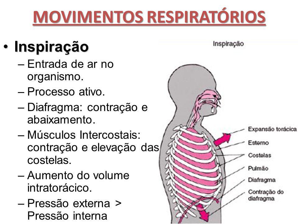 MOVIMENTOS RESPIRATÓRIOS InspiraçãoInspiração –Entrada de ar no organismo. –Processo ativo. –Diafragma: contração e abaixamento. –Músculos Intercostai