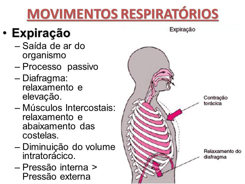 MOVIMENTOS RESPIRATÓRIOS ExpiraçãoExpiração –Saída de ar do organismo –Processo passivo –Diafragma: relaxamento e elevação. –Músculos Intercostais: re