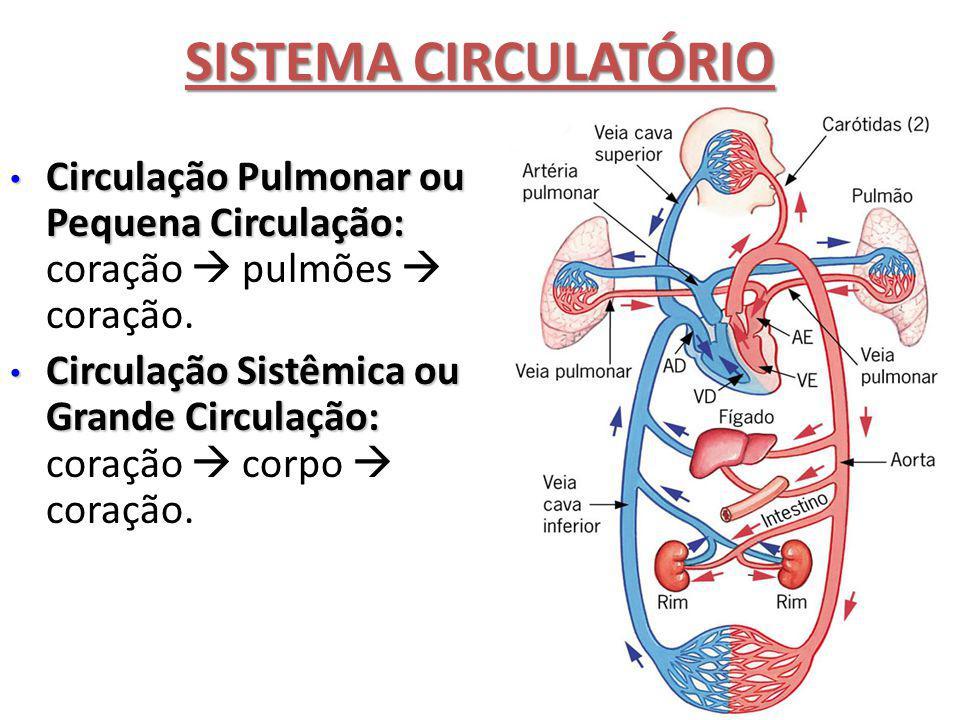 SISTEMA CIRCULATÓRIO Circulação Pulmonar ou Pequena Circulação: Circulação Pulmonar ou Pequena Circulação: coração  pulmões  coração. Circulação Sis