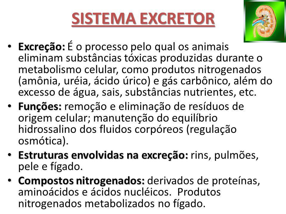 Excreção: Excreção: É o processo pelo qual os animais eliminam substâncias tóxicas produzidas durante o metabolismo celular, como produtos nitrogenado