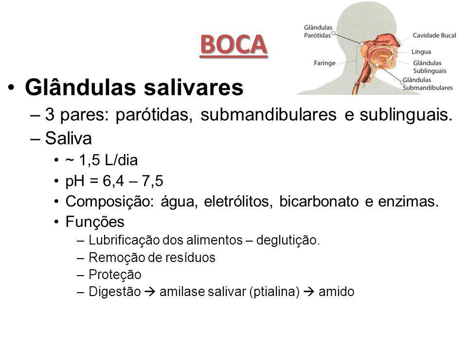 BOCA Glândulas salivares –3 pares: parótidas, submandibulares e sublinguais. –Saliva ~ 1,5 L/dia pH = 6,4 – 7,5 Composição: água, eletrólitos, bicarbo
