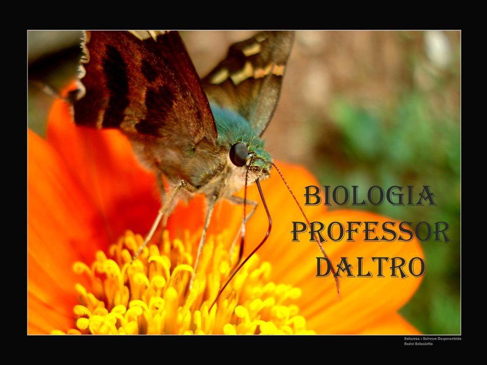 Biologia Professor Daltro