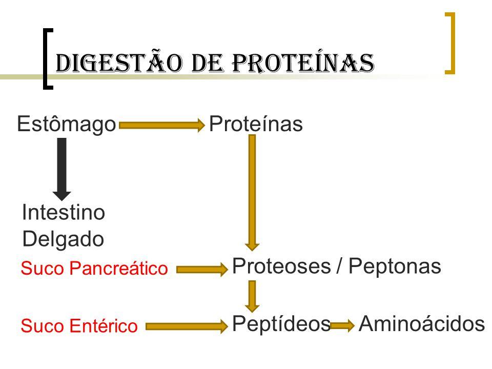 Digestão de proteínas EstômagoProteínas Intestino Delgado Suco Pancreático Suco Entérico Proteoses / Peptonas PeptídeosAminoácidos