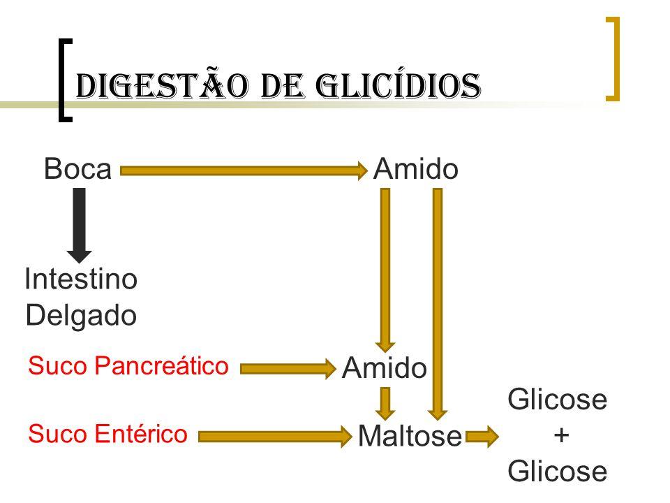 Digestão de glicídios Boca Intestino Delgado Amido Suco Pancreático Suco Entérico Maltose Amido Glicose + Glicose