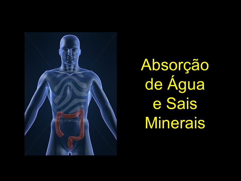 Absorção de Água e Sais Minerais