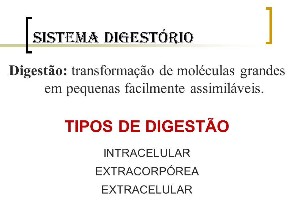 Sistema digestório Digestão: transformação de moléculas grandes em pequenas facilmente assimiláveis. TIPOS DE DIGESTÃO INTRACELULAR EXTRACORPÓREA EXTR