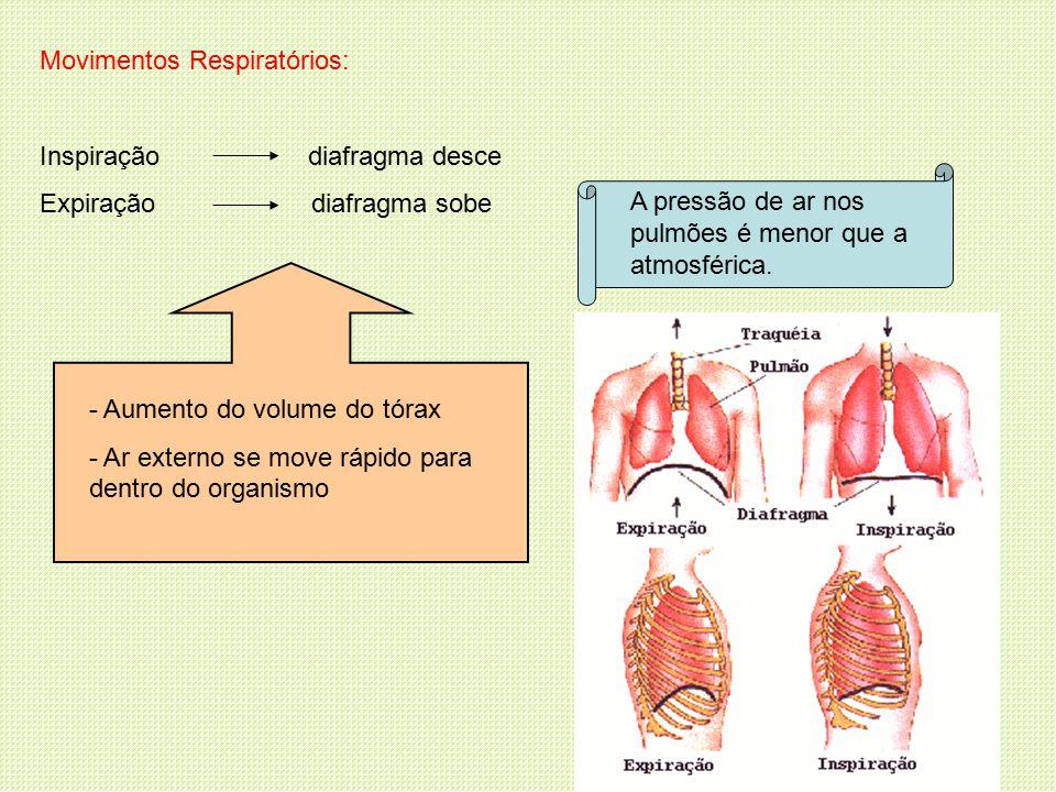 Movimentos Respiratórios: Inspiração diafragma desce Expiração diafragma sobe - Aumento do volume do tórax - Ar externo se move rápido para dentro do organismo A pressão de ar nos pulmões é menor que a atmosférica.
