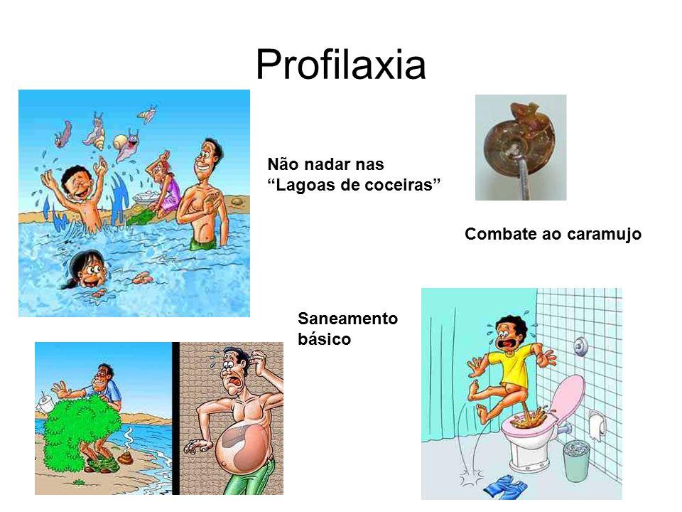 Profilaxia Combate ao caramujo Não nadar nas Lagoas de coceiras Saneamento básico