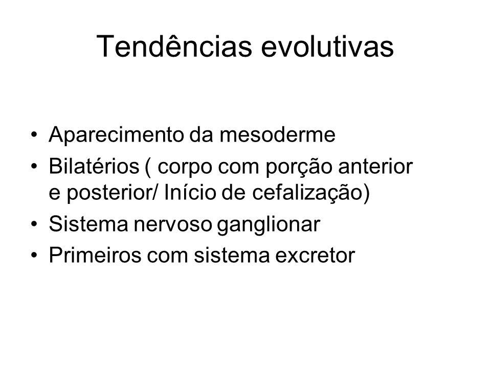 Tendências evolutivas Aparecimento da mesoderme Bilatérios ( corpo com porção anterior e posterior/ Início de cefalização) Sistema nervoso ganglionar Primeiros com sistema excretor