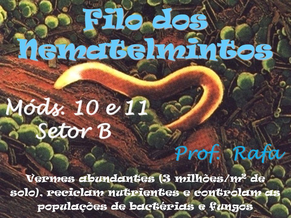 Vermes abundantes (3 milhões/m 2 de solo), reciclam nutrientes e controlam as populações de bactérias e fungos Filo dos Nematelmintos Prof.