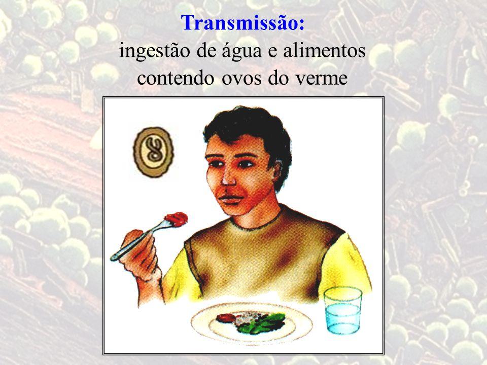 Transmissão: água e alimentosingestão de contendo ovos do verme