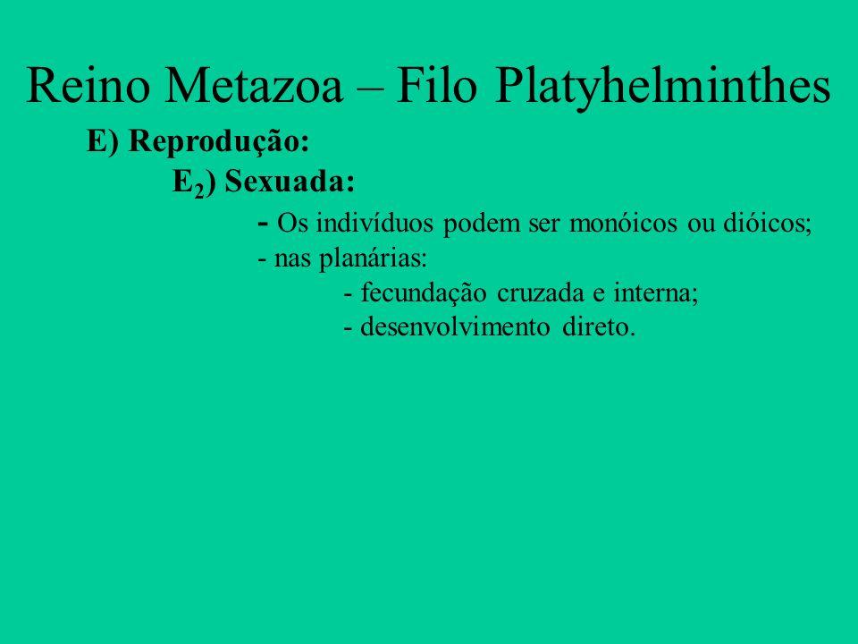 Reino Metazoa – Filo Platyhelminthes E) Reprodução: E 2 ) Sexuada: - Os indivíduos podem ser monóicos ou dióicos; - nas planárias: - fecundação cruzad