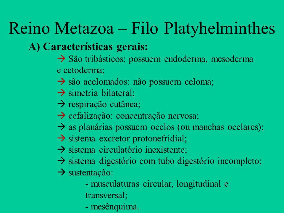 Reino Metazoa – Filo Platyhelminthes A) Características gerais:  São tribásticos: possuem endoderma, mesoderma e ectoderma;  são acelomados: não pos