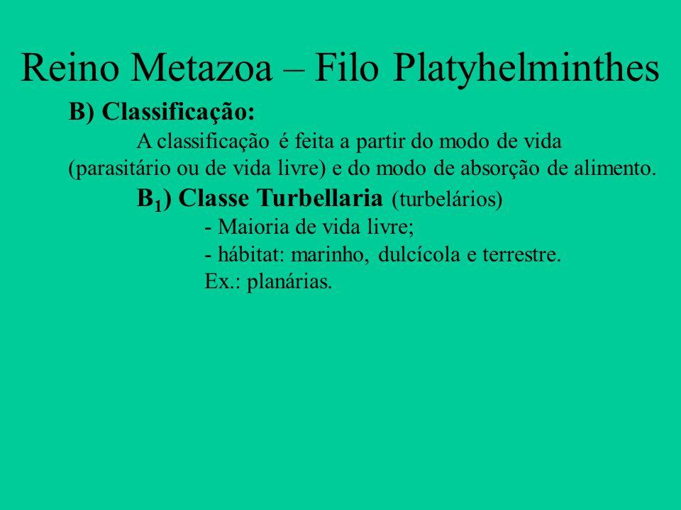 Reino Metazoa – Filo Platyhelminthes B) Classificação: A classificação é feita a partir do modo de vida (parasitário ou de vida livre) e do modo de ab