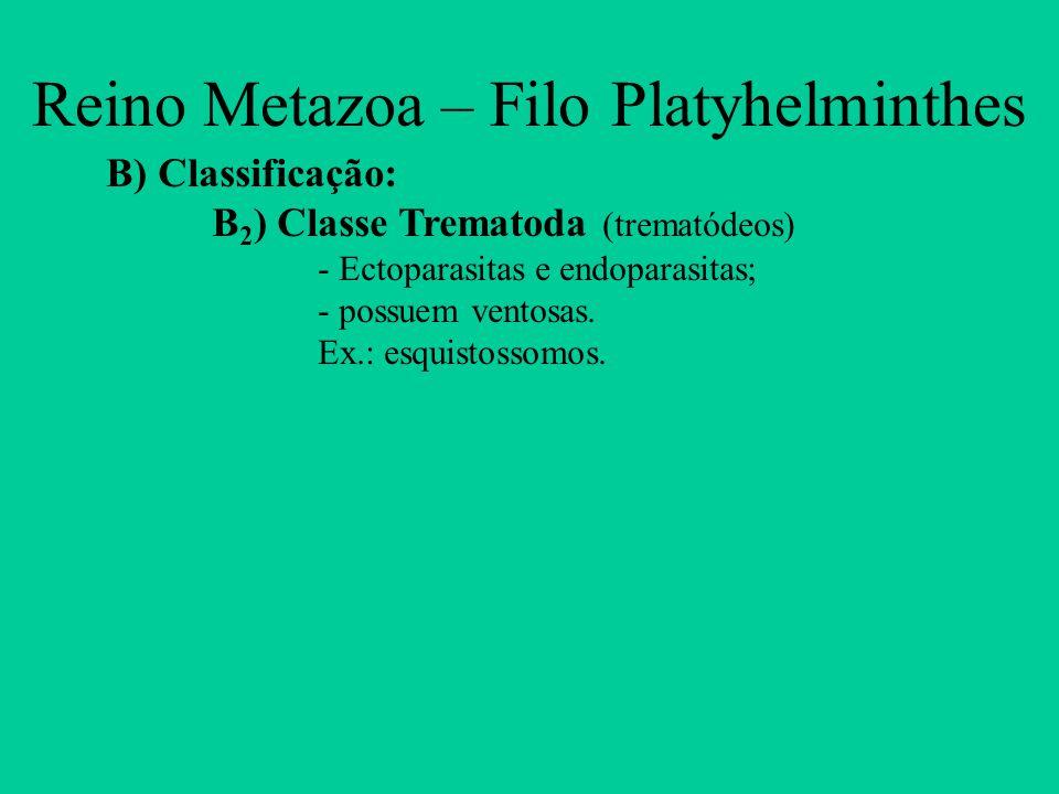 B) Classificação: B 2 ) Classe Trematoda (trematódeos) - Ectoparasitas e endoparasitas; - possuem ventosas. Ex.: esquistossomos. Reino Metazoa – Filo