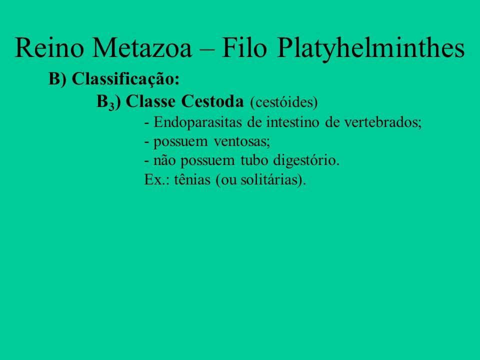 Reino Metazoa – Filo Platyhelminthes B) Classificação: B 3 ) Classe Cestoda (cestóides) - Endoparasitas de intestino de vertebrados; - possuem ventosa