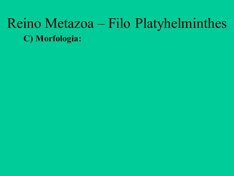 Reino Metazoa – Filo Platyhelminthes D) Nutrição: - Digestão intracelular e extracelular; - por ingestão (planárias) ou por difusão (tênias).