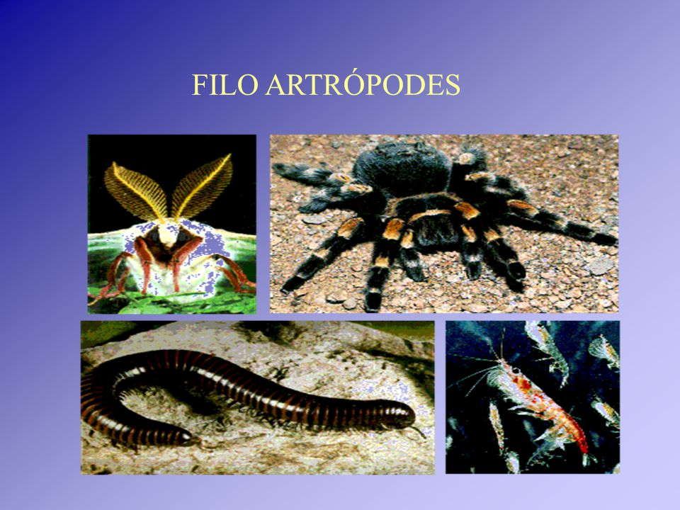 Reúne mais de 1 milhão de espécies Vivem nos mais variados ambientes terrestres, de água doce e de água salgada.