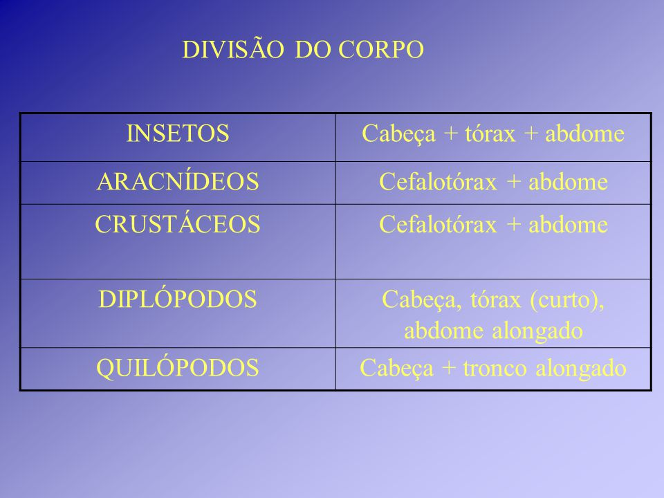 DIVISÃO DO CORPO INSETOSCabeça + tórax + abdome ARACNÍDEOSCefalotórax + abdome CRUSTÁCEOSCefalotórax + abdome DIPLÓPODOSCabeça, tórax (curto), abdome alongado QUILÓPODOSCabeça + tronco alongado