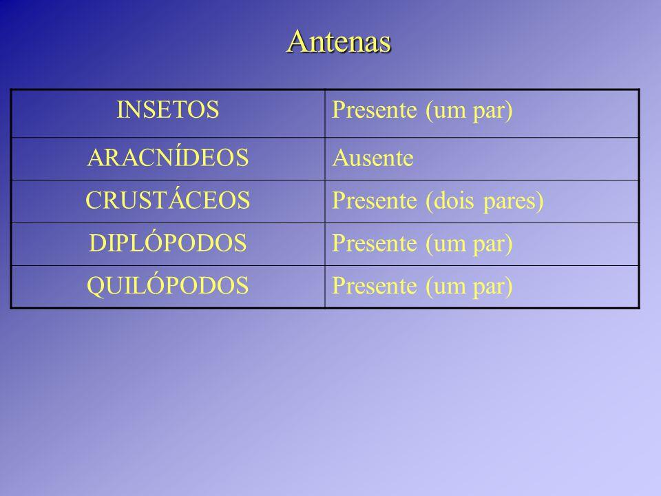 Antenas INSETOSPresente (um par) ARACNÍDEOSAusente CRUSTÁCEOSPresente (dois pares) DIPLÓPODOSPresente (um par) QUILÓPODOSPresente (um par)