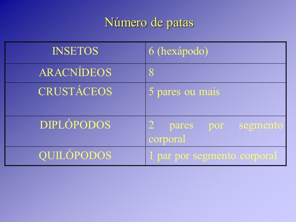 Número de patas INSETOS6 (hexápodo) ARACNÍDEOS8 CRUSTÁCEOS5 pares ou mais DIPLÓPODOS2 pares por segmento corporal QUILÓPODOS1 par por segmento corporal