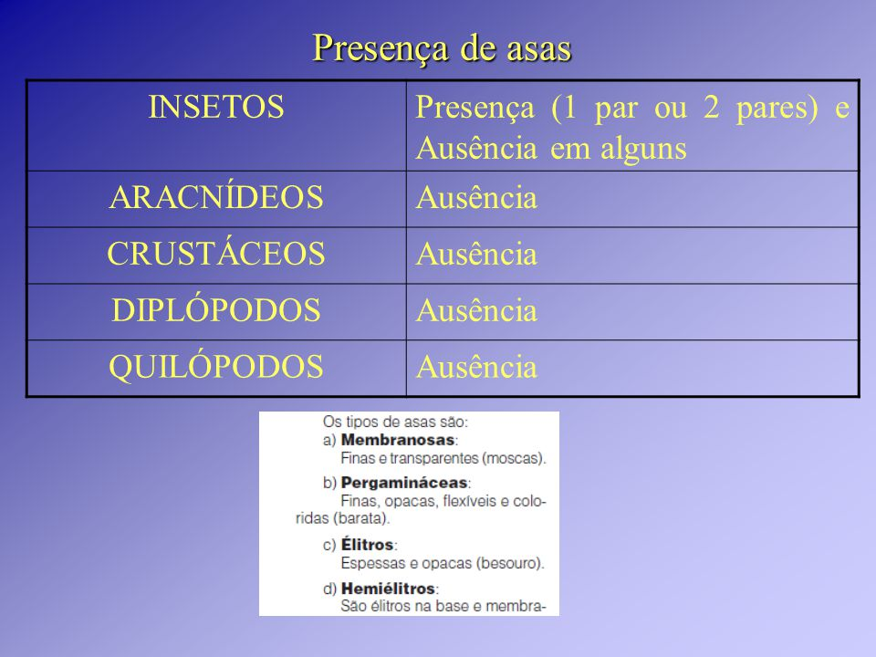 Presença de asas INSETOSPresença (1 par ou 2 pares) e Ausência em alguns ARACNÍDEOSAusência CRUSTÁCEOSAusência DIPLÓPODOSAusência QUILÓPODOSAusência