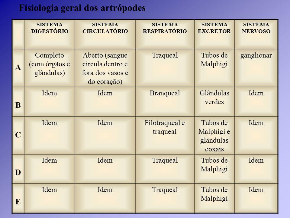 SISTEMA DIGESTÓRIO SISTEMA CIRCULATÓRIO SISTEMA RESPIRATÓRIO SISTEMA EXCRETOR SISTEMA NERVOSO A Completo (com órgãos e glândulas) Aberto (sangue circu